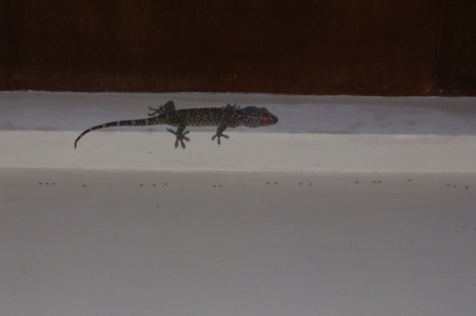 "Creepy little red-eyed lizard. Not sure if this is the one called ""tuko."" There were a LOT of these over there."